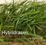 hybridrasen