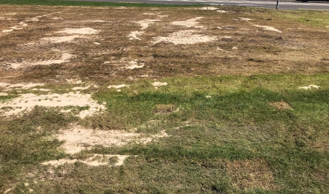 Instandstellung der Rasenflächen nachZürifäscht
