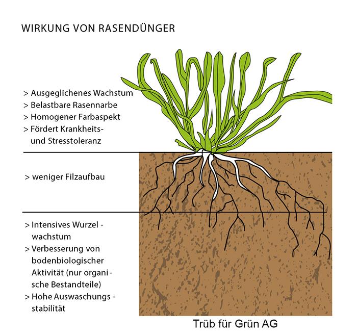 Wirkung von Rasendünger Trüb für Grün AG